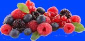fruits_des_bois